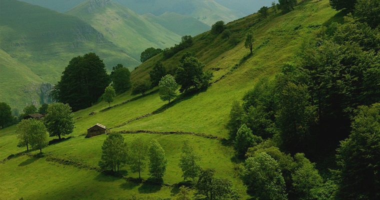 A GREEN PARADISE